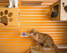 What we're reading - A healthier way to feed your cat: Hide its meals, says The New York Times