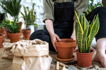 Millennials and the Food Gardening Plant Parent Trend
