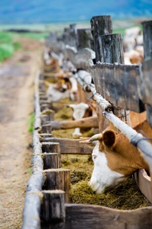 58% of Consumers Are Increasingly Concerned About Food Animal Welfare