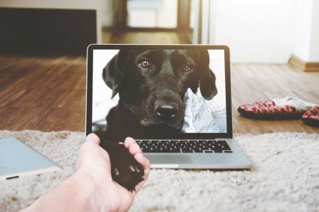 E-commerce Accounts for 12% of U.S. Pet Medications Market Sales