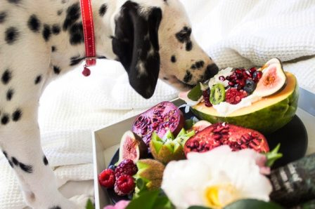 10 Healthiest Human Foods You Should Be Feeding Your Dog
